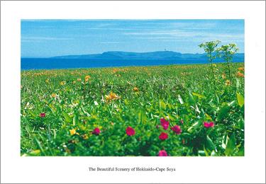 声問海岸の花園から望む宗谷丘陵