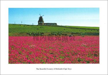 アルメリアの花とゲストハウス「アルメリア」 -宗谷岬-