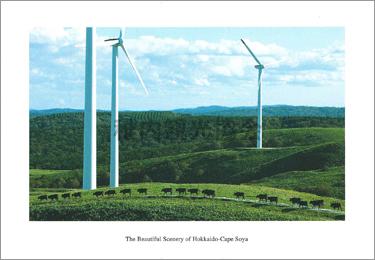 宗谷丘陵に建つ風車と宗谷黒牛