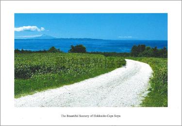宗谷丘陵フットパスの白い道