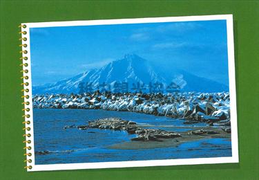 抜海港のアザラシ
