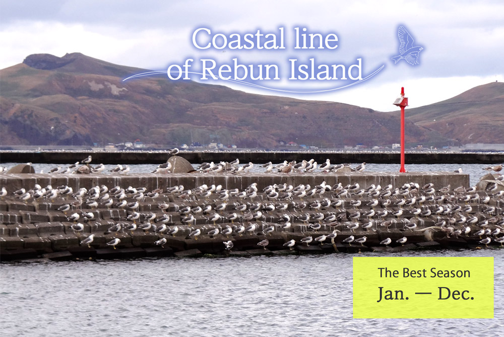 Coastal line of Rebun Island