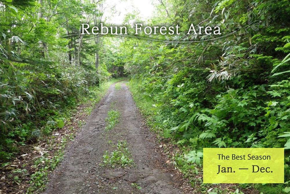 Rebun Forest Area