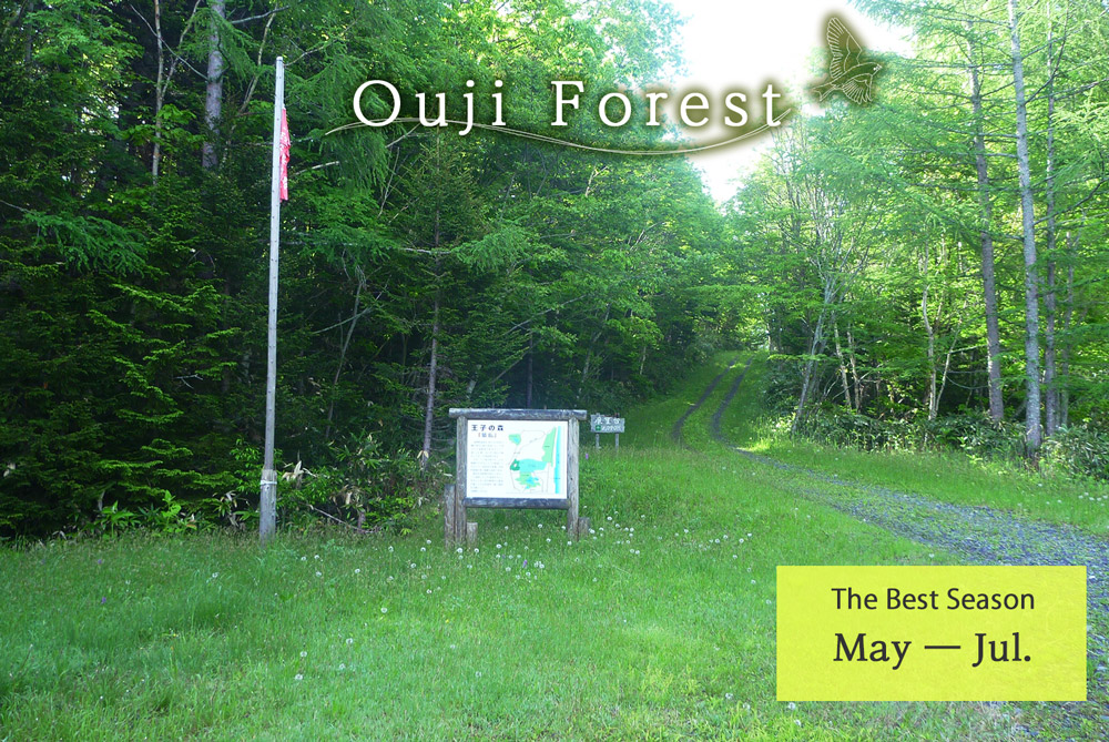Ouji Forest