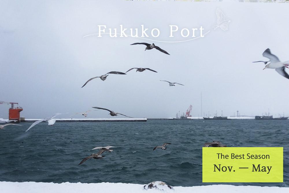Fukuko Port